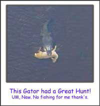 Gator Eating Deer